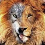 LionWolf